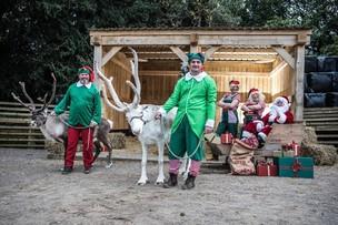Main image for Festive farm visit for TV vet Peter
