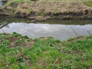 Main image for River Dearne's oil leak probed